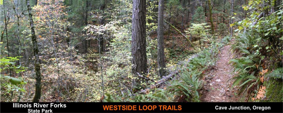 westside-loop-trails-cave-junction-oregon-2