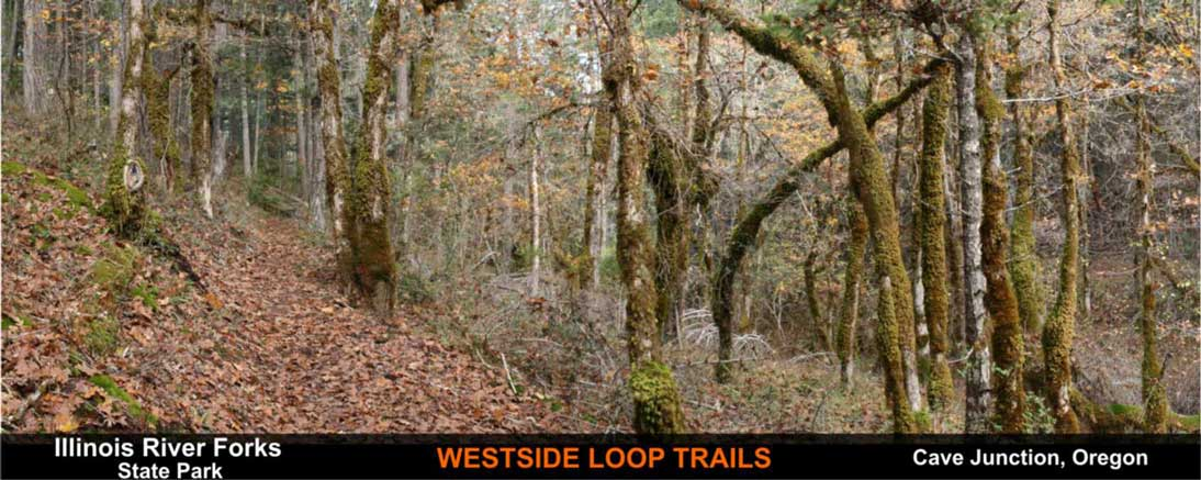 westside-loop-trails-cave-junction-oregon-3