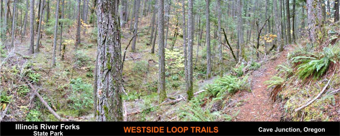 westside-loop-trails-cave-junction-oregon-5