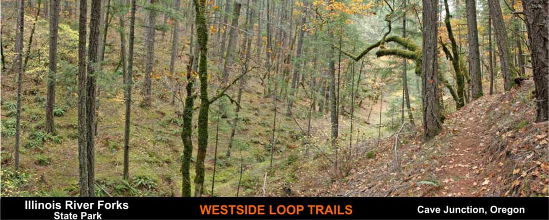 westside-loop-trails-cave-junction-oregon-6