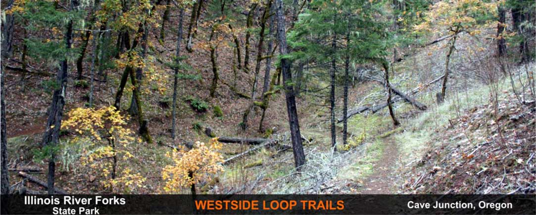 westside-loop-trails-cave-junction-oregon-7