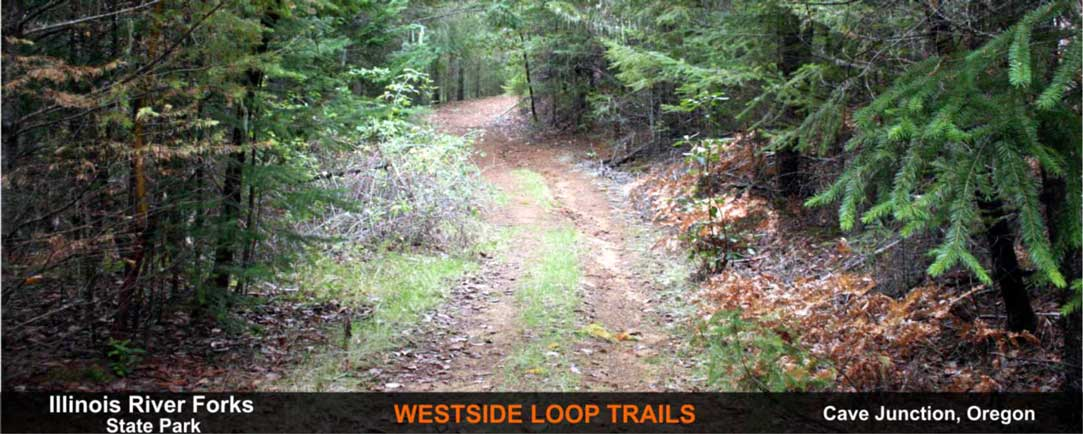 westside-loop-trails-cave-junction-oregon-8