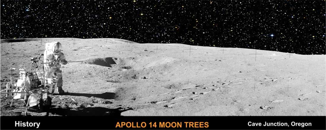 history-apollo-14-moon-trees-cave-junction-oregon
