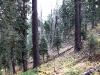 Approaching Weston Peak - sample sloped area