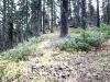 Approaching Weston Peak - sample ridge slope