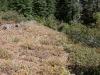 Trails along ridge top