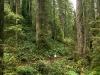 Redwood forest trails