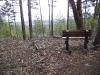 forks-state-park-trail-vista