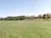 Moon Tree Run - cattle ranch