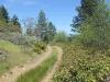 Moon Tree Run - ditch road blackberries