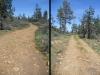 Moon Tree Run - Rocky road