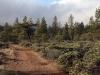 Moon Tree Run - shortcut road