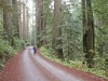 redwood-forest-howland-hill-road-california