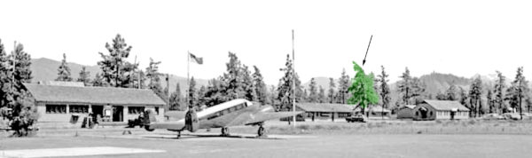 Photo of the smokejumper heritage tree as seen from the airport tarmac. Cave Junction, Oregon