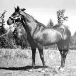 Photo of Goyamo the race horse at Sucker Creek Ranch in the 1960s. Oregon Caves Road Guide, Cave Junction, Oregon