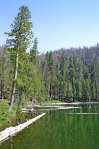 Photo of Babyfoot Lake Botanical Area, Kalmiopsis Wilderness, Cave Junction, Oregon