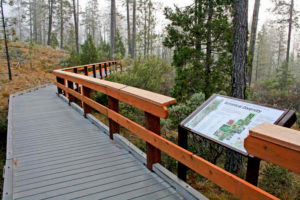 Photo of Eight Dollar Mountain Botanical Boardwalk, Cave Junction, Oregon