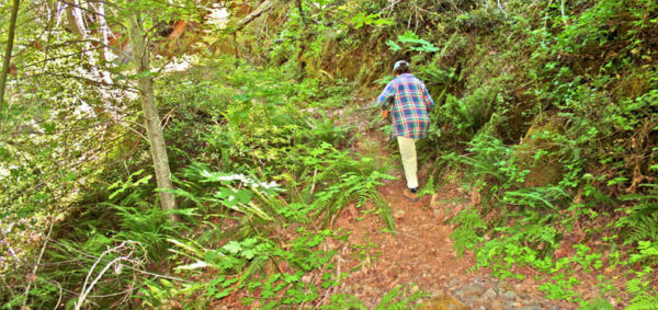 Photo of hiker on the Osgood Ditch Trail, Cave Junction, Oregon