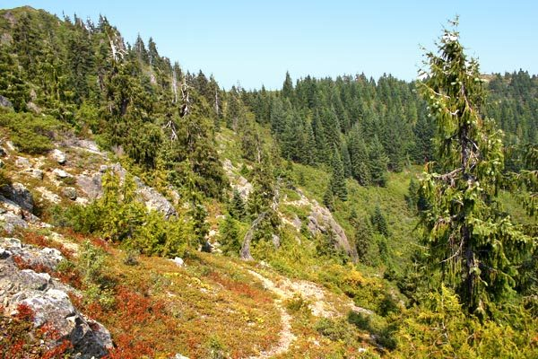 Photo showing upper section of the Rabbit Lake trail, Cave Junction Oregon